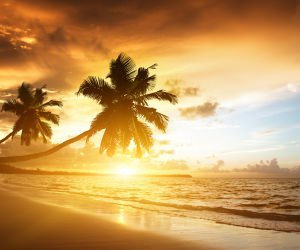 Beach With Palm Trees At Sunset Wallpaper