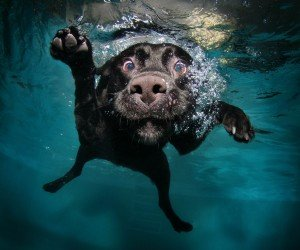 Underwater Dog Wallpaper