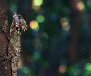 Lizard Clinging to a Tree Wallpaper