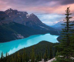 Peyto Lake, Canada Wallpaper
