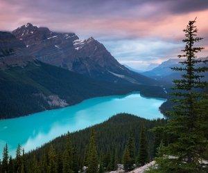 Peyto Lake, Canada Wallpaper